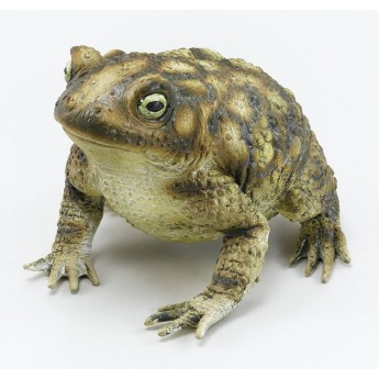 Rubber Toad Realistic Halloween Prop